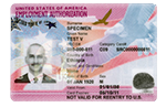 Employment Authorization Document (EAD)
